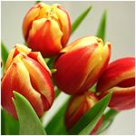Blumen und Florstik Onlineshops